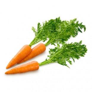 新鲜胡萝卜 青菜萝卜东升品质保证 胡